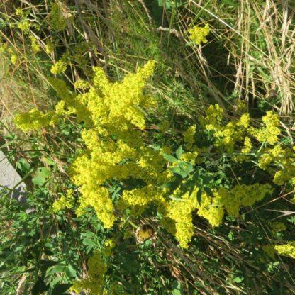 Acidic Soils Wildflower Mix