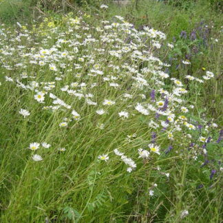 Calcareous Soils Wildflower Mix