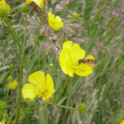 Neutral Damp Soils Wildflower Mix