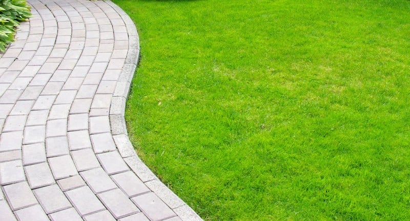 maintaining your garden grass
