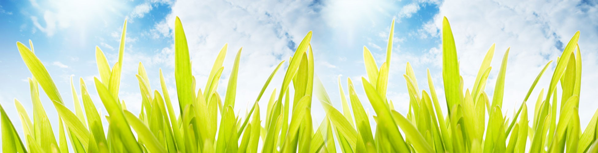 grass header banner - lawn seed - grass seed - spring grass seed