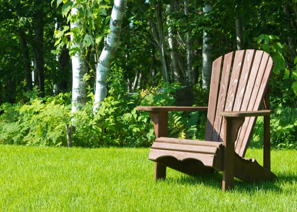 Summer Season Gardening Tips